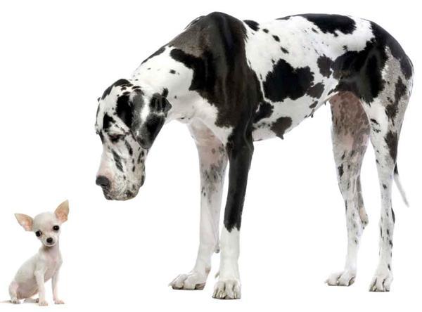 big-vs-little